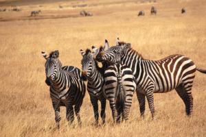 Trois spots de randonnée à explorer au cours d'un circuit en Tanzanie